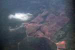 Deforestation in Borneo -- sabah_2512