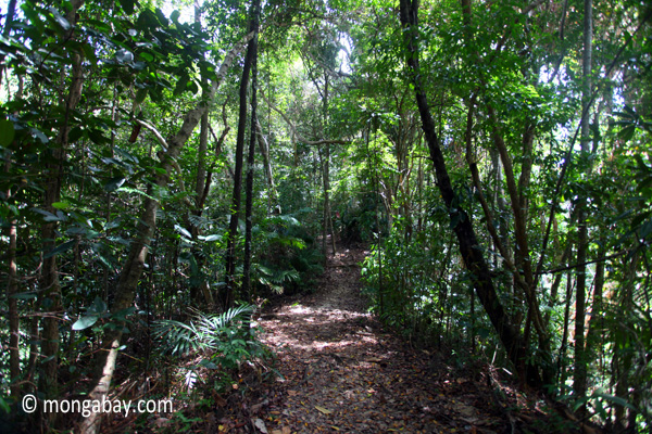 Sapi Island forest -- sabah_0246