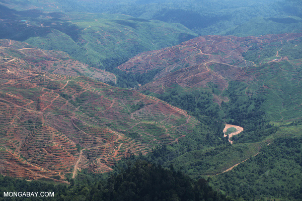 Forest loss in Malaysia