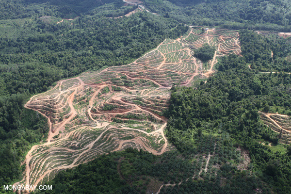 Oil palm plantations, seen here in Malaysia, are a common crop grown on 'grabbed' lands. Many of these deals have become controversial. Photo by: Rhett A. Butler.