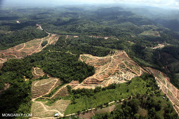 Deforestation for palm oil production in Malaysia