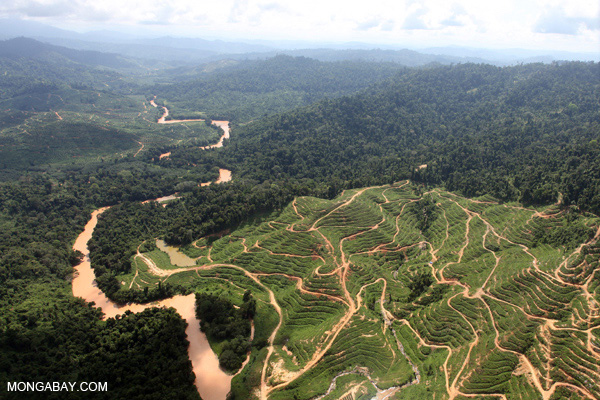 Deforestation for oil palm plantations in the Malaysian state of Sabah on Borneo. Photo by: Rhett A. Butler.