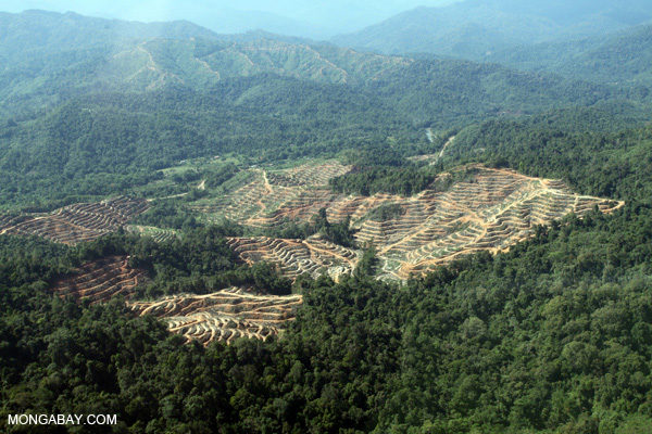 >Deforestation for palm oil production in Borneo