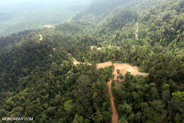 Logged forest in Malaysian Borneo. Photo by: Rhett A. Butler.