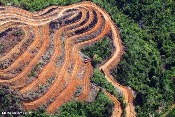 Destruction of rainforest in Borneo for oil palm plantations. Photo by: Rhett A. Butler.