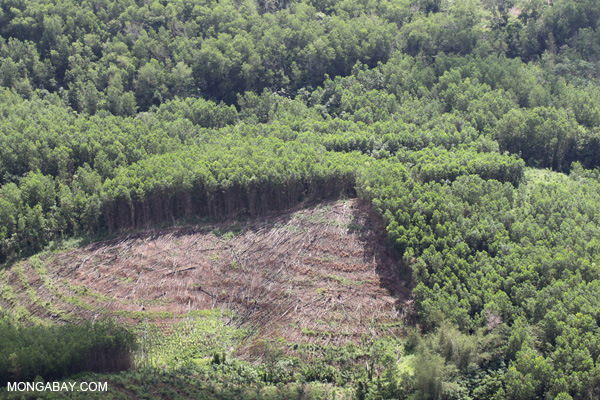 Timber plantation in Sabah.