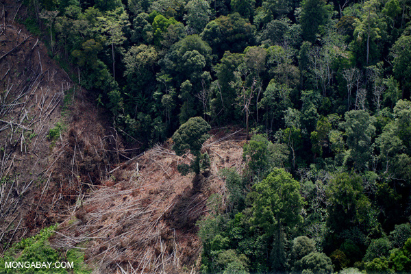 Deforestation for an oil palm plantation in Malaysian Borneo