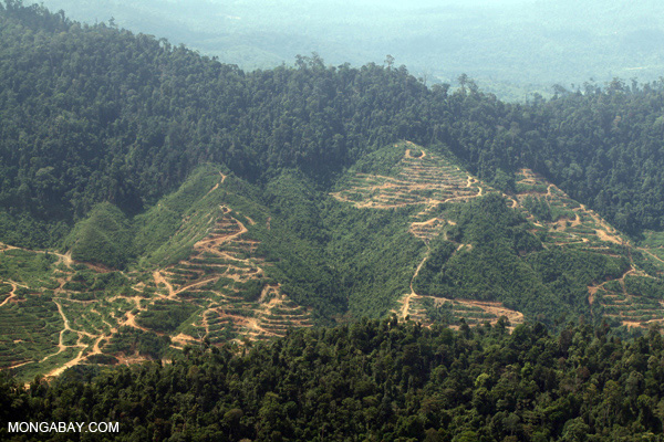 Clearing of hillsides for oil palm in Sabah.