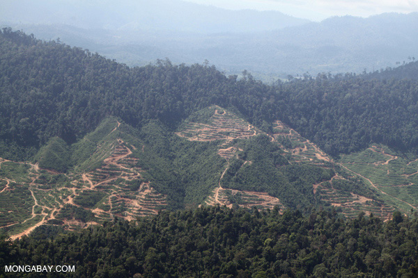 Deforestation for palm oil production in Malaysian Borneo in 2012