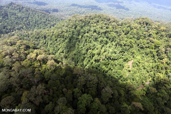 Primeval rainforest in Sabah