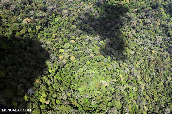 Intact primary rainforest in Sabah, Malaysian Borneo. Photo by: Rhett A. Butler.
