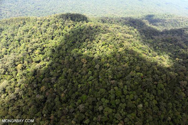 Tentang kontak mongabay facebook mongabay twitter foto hutan hujan