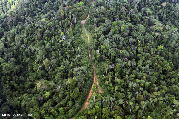 Logging road in Sabah.