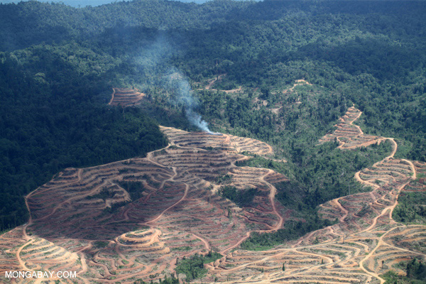 Biodiversity-rich rainforests make way for palm oil plantations in Malaysian Borneo. Photo by: Rhett A. Butler.