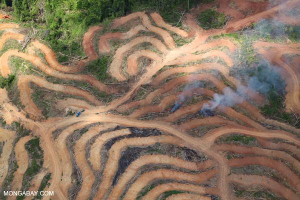 Fire burning in oil palm plantation in Malaysian Borneo. Photo by: Rhett A. Butler.