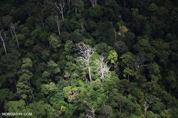 Rainforest in Borneo. If tropical rainfall patterns shift, ecosystems like rainforests could be hugely impacted. Photo by: Rhett A. Butler.