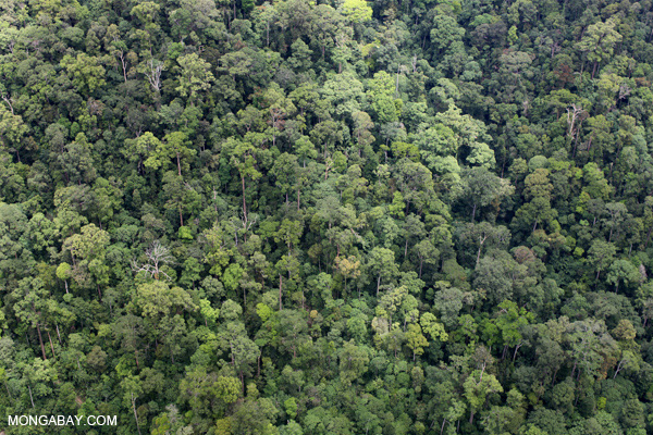 According to a controversial theory, forests—such as this one in Borneo—drive winds bringing rain from the coasts to continental interiors. Photo by: Rhett A. Butler.