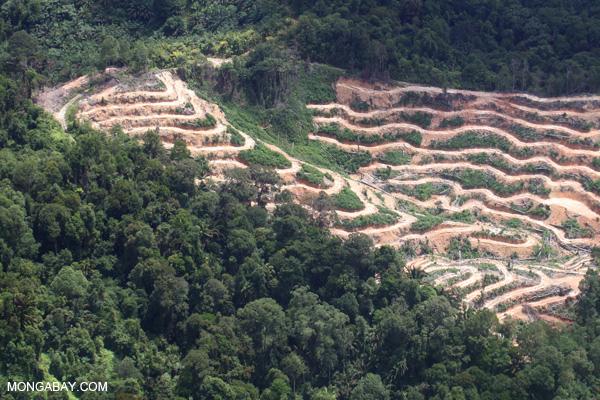 Deforestation in Borneo -- sabah_2087