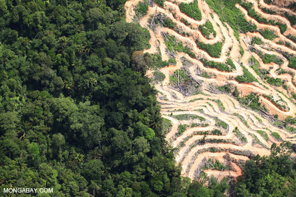 Deforestation in Borneo. Photo by: Rhett A. Butler.