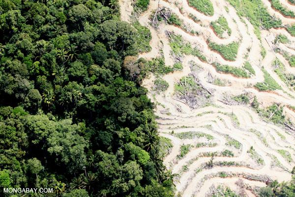Deforestation in borneo sabah 2093 image code sabah 2093 photographer