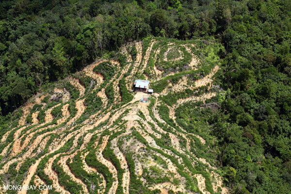 Deforestation in Borneo -- sabah_2132