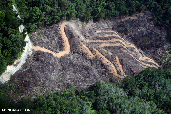 Deforestation for palm oil production in Borneo. Photo by Rhett A. Butler