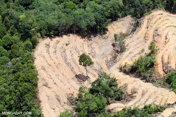 Deforestation for palm oil in Sabah, Malaysia. Often logged forests are then converted to plantations or pastures. Photo by: Rhett A. Butler.