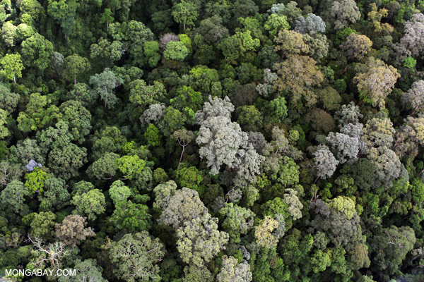 Aerial view of Imbak Canyon Conservation Area in Malaysian Borneo. Malaysia has the world's highest rate of forest destruction. Photo by: Rhett A. Butler.