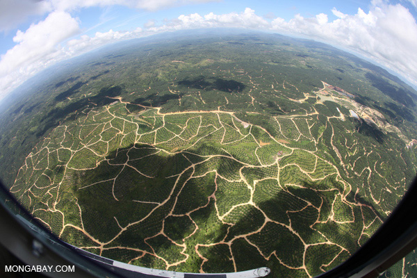 Sea of oil palm plantations in Sabah.
