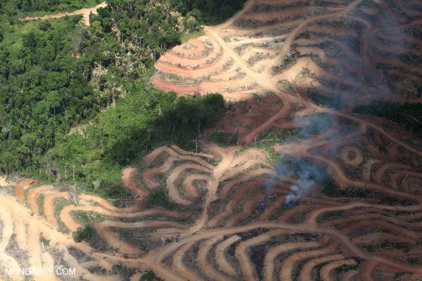 deforestation for paper production