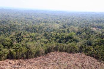 Deforestasi di Peru