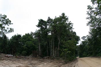 Logging concession in Gabon