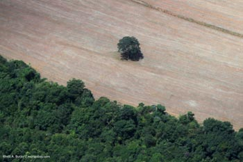 Deforestation in the Brazilian Amazon