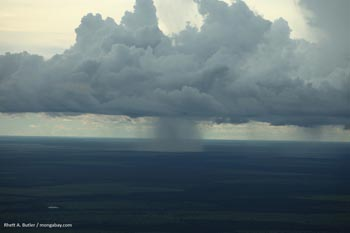 Rain falling on the Amazon rainforest