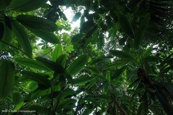 Hutan hujan di Columbia