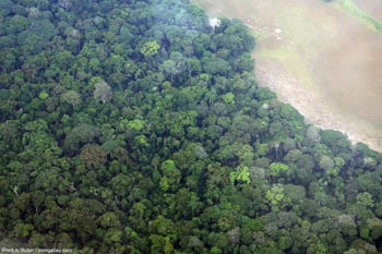Aerial view of the Gabonese rainforest