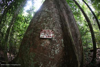 No logging sign in Gunung Palung National Park in Kalimantan