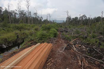 Illegal logging in Kalimantan