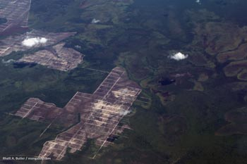 Airplane view of destruction of peatlands in Kalimantan