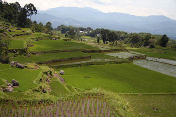 Terraced rice paddies in Torajaland
