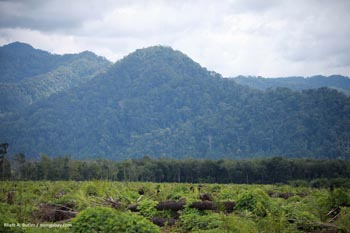 Deforestation for palm oil production in Sumatra