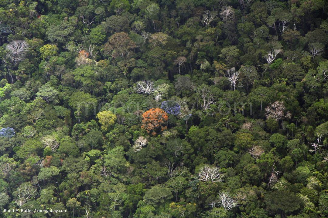 Kanopi hutan hujan amazon