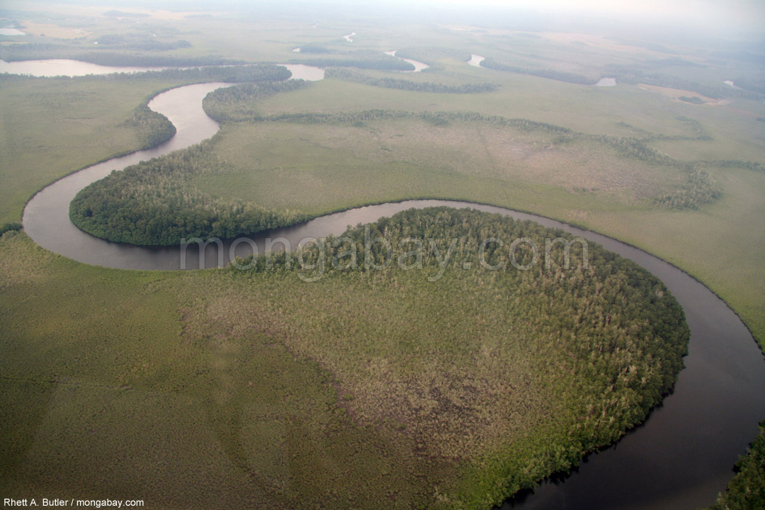 Aerial view of a rainforest river in Gabon