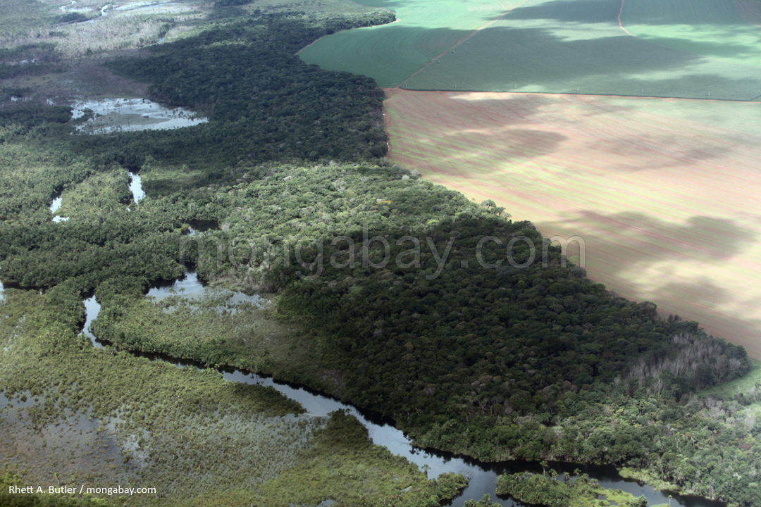Deforestation for soy in the Amazon