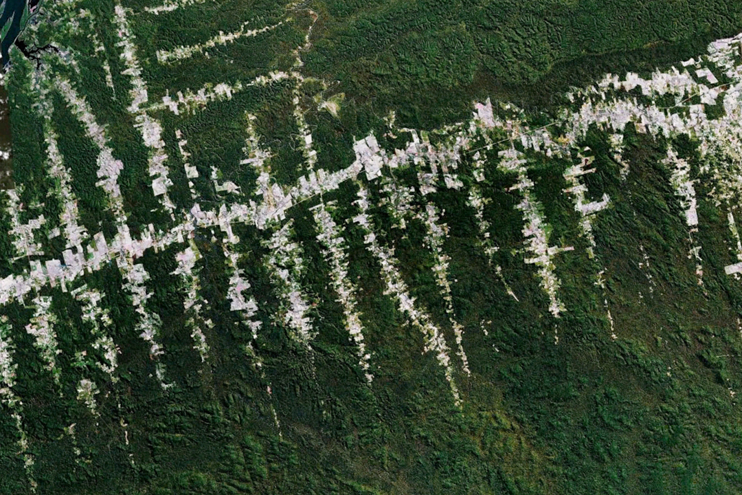 Photo satellite de la  dforestation au Brsil, avec la gracieuse autorisation de Google Earth