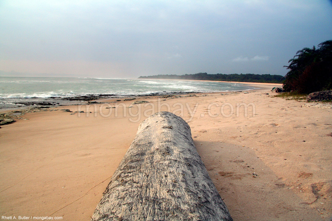 Log on a beach in Gabon