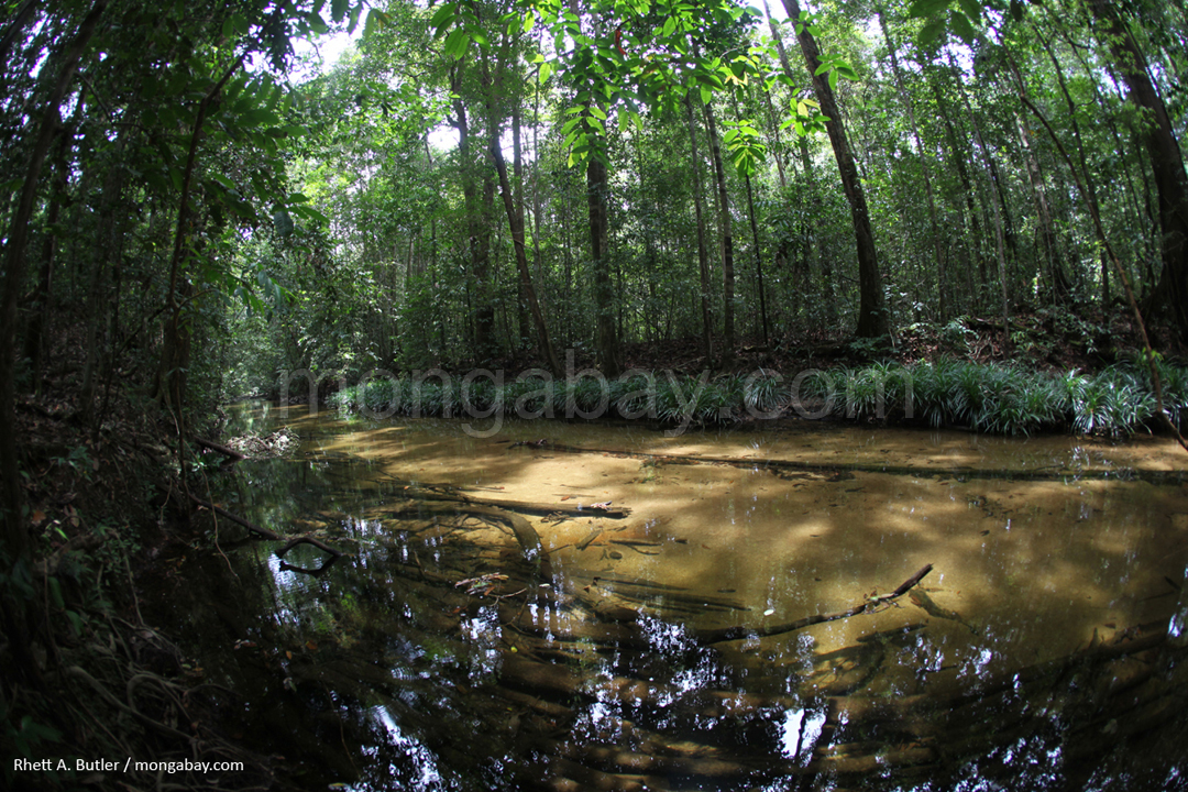 Rainforest creek in Kalimantan