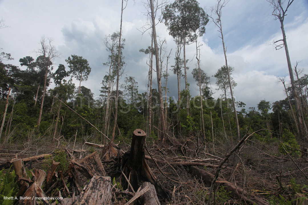Destruction of peat forest in Kalimantan