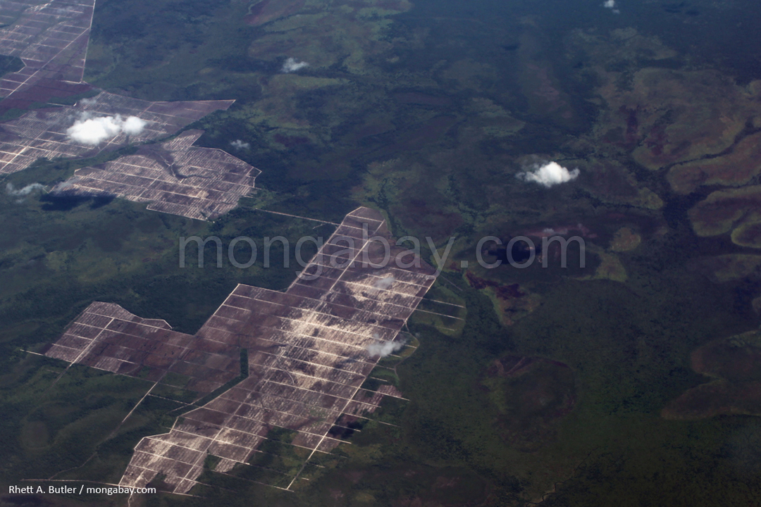 Airplane view of destruction of peatlands in Kalimantan