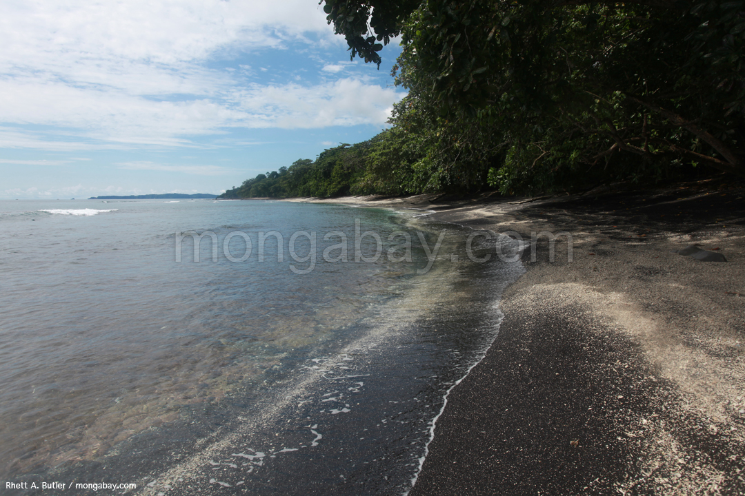 A beach where the Maleo once laid its eggs.